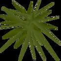 Weeds detail