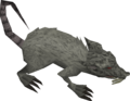 Blessed rat old.png