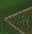 Snape grass1.png