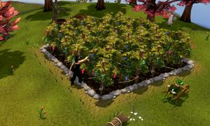 Farming grapevines