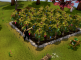 Money making guide/Farming grapevines