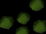 Kwuarm seed