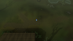 PHAS Lumbridge Swamp