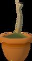 Papaya sapling detail.png