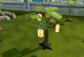 Anniversary tree (Falador).png