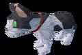 Pet kitten (white and black) pet.png