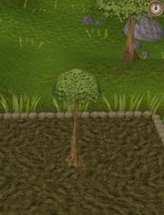 Spirit tree5
