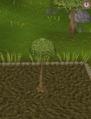 Spirit tree5.png
