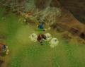 Araxxor's bomb attack.png