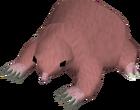 Baby mole old
