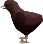Raven chick (red crested) pet