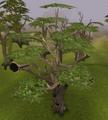 Swaying tree.png