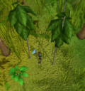 Cutting a teak tree on Ape Atoll.png