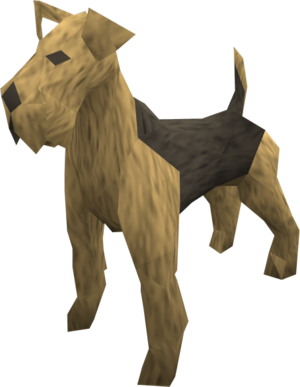Terrier (tan) pet