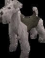 Terrier (grey) pet.png