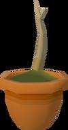 Oak sapling detail