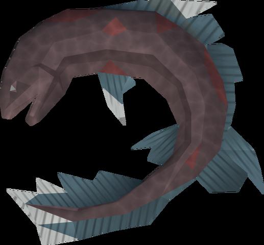 File:Salve eel detail.png