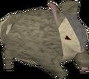 Chinchompa (Hunter)
