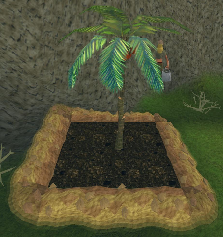 Palm Tree Runescape Wiki Fandom Powered By Wikia