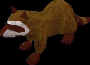 Raccoon (red) pet