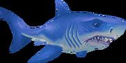 Great white shark (Aquarium)