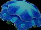 Raw blue blubber jellyfish