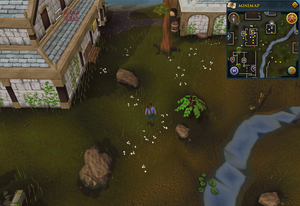 Compass clue Edgeville south-east of bank