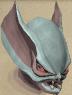 File:Sentinel Mortshade chathead.png