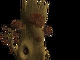 Maple evil tree