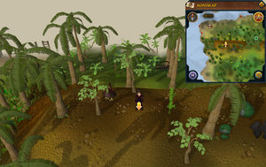 Scan clue Kharazi Jungle on ridge north-west corner of jungle