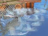 Swarm (fishing spot)