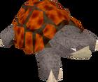 War tortoise old
