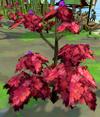 Rumberry bush