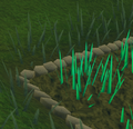 Snape grass4.png