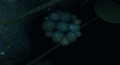 Polypore lower level.png