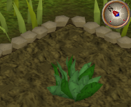 File:GreenHerb3.png
