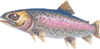 Leaping trout (Aquarium)