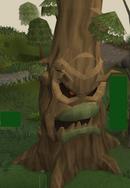 Oak evil tree