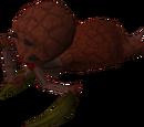 Abyssal leech