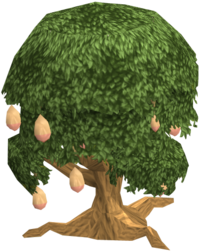Mango tree fairy tale
