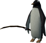Red Raktuber penguin (fishing)