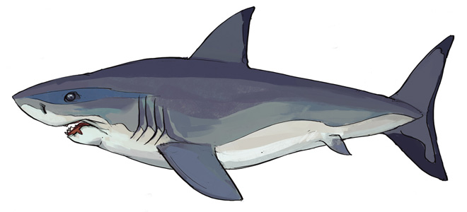RS News Main Aquarium (5) update image