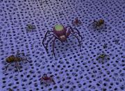 Spider court 1