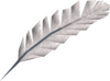 Quill detail