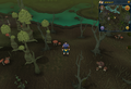 Scan clue Haunted Woods east of fairy ring.png