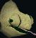 Adult chameleon (desert) chathead.png