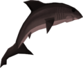Burnt great white shark detail.png