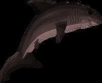 Burnt great white shark detail