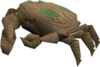 Baby giant crab (brown and green) pet