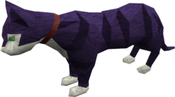 Pet cat (purple) pet